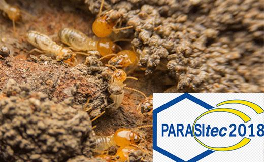 termite antiparasitaire 3D